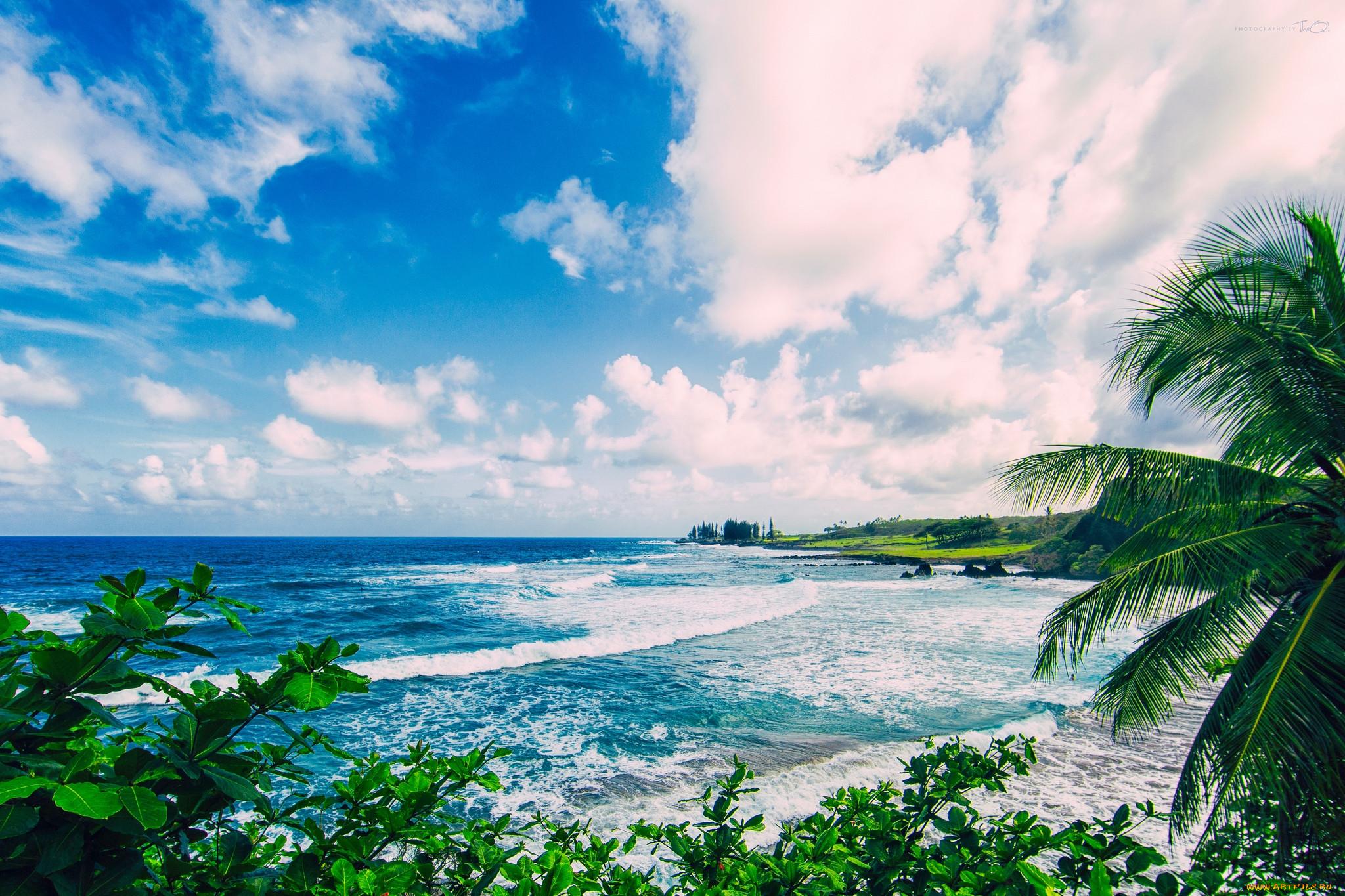 бесплатно широкоформатные картинка море с пальмами большого разрешения крем-суп